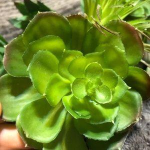 Accents - Faux succulents